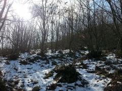 Προπόνηση στην διαδρομή του αγώνα Σουγλιάνι Trail 15-02-2015